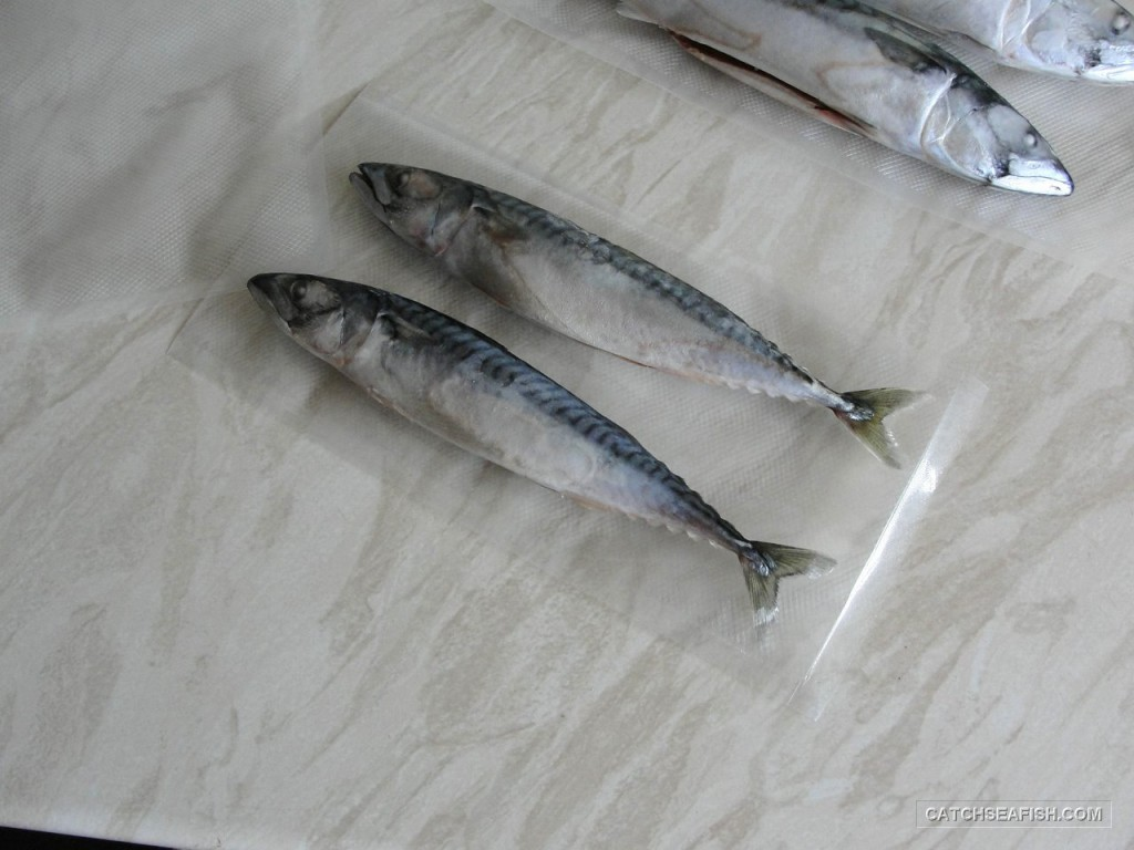 Two fish ready to vac pack
