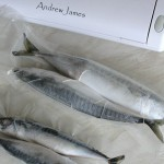 160x450 vacuum pouches for much larger mackerel or herrings for the table