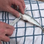 filleting-knife-16
