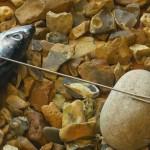 baiting-needle-02