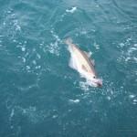 sea-boat-fishing-03