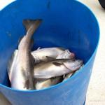 sea-boat-fishing-12