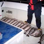 sea-boat-fishing-17
