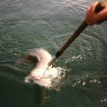 sea-boat-fishing-57
