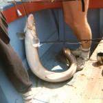 sea-boat-fishing-58