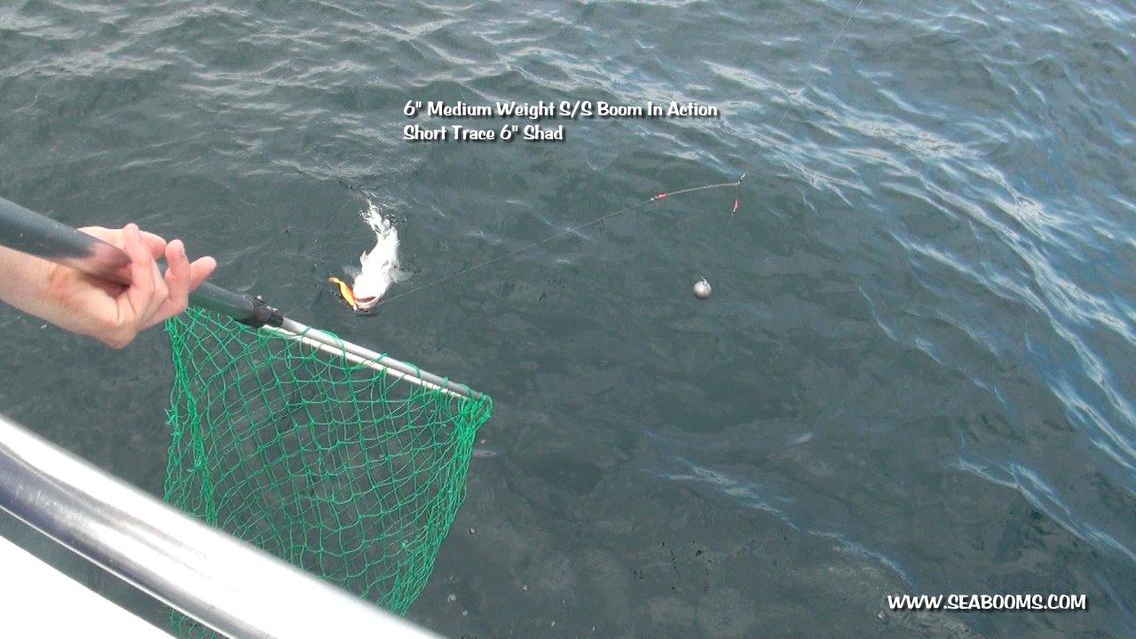 Black sea fishing boom