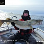 Large Cod caught on lres in Norway
