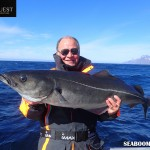 Coalfish caught in the Lofoten Islands