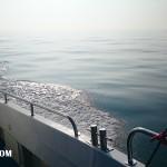 wild-frontier-charter-boat-001 Pollock fishing