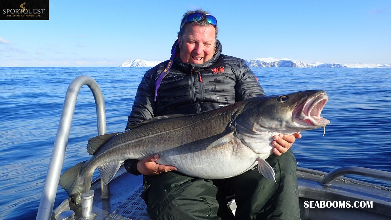 New lures for fishing soroya norway catching big cod sea for Big fish tackle